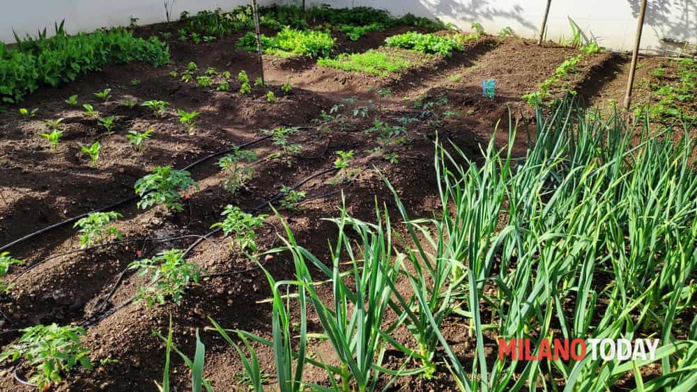 Lombardia, via libera alla coltivazione degli orti a ...