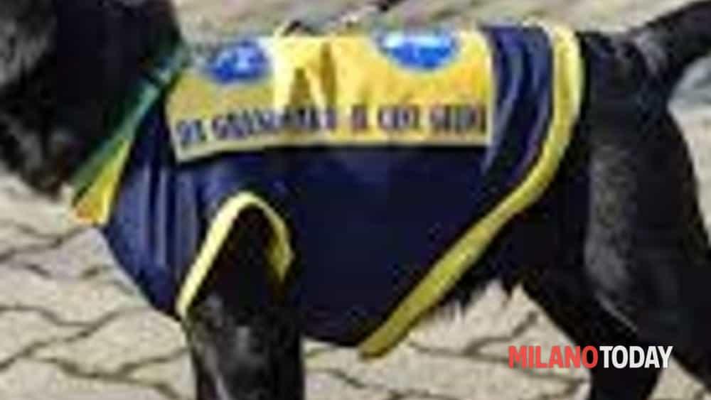Sala Parto Per Cani : Casse parto per cani vendita e noleggio facebook