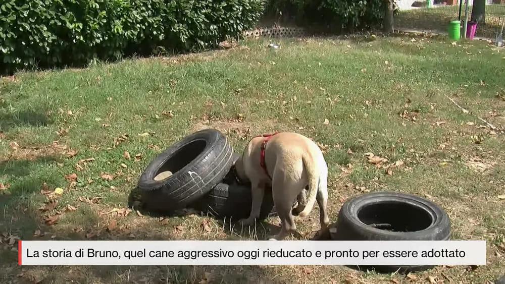 Milano La Storia Del Cane Bruno Oggi è Pronto Per Essere Adottato