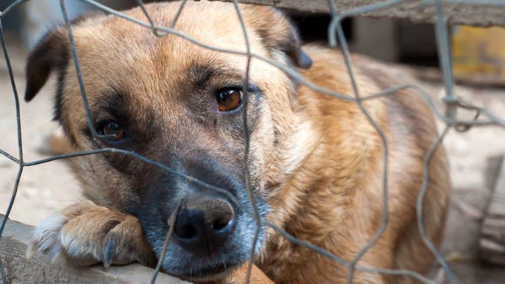 Contro la zuppa di cane coreana: la petizione della Brambilla – MilanoToday