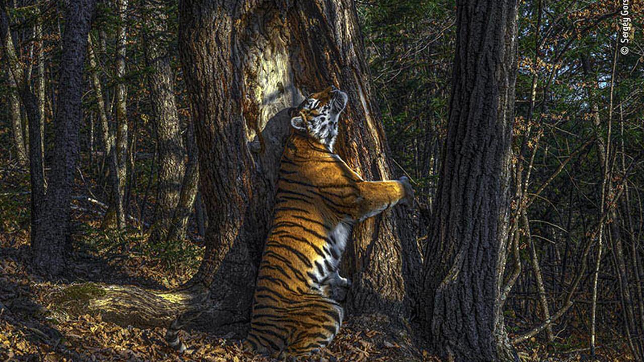 Wildlife photographer of the year 56 thumbnail